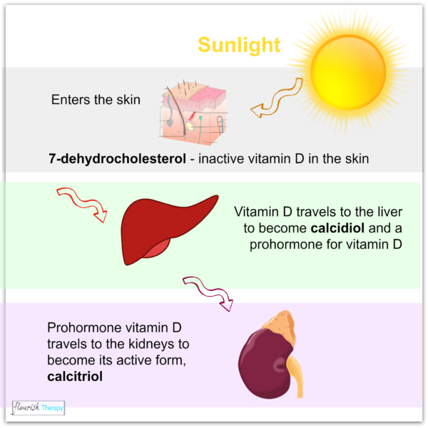 Why we need UV light, vitamin D deficiency, sources of vitamin D